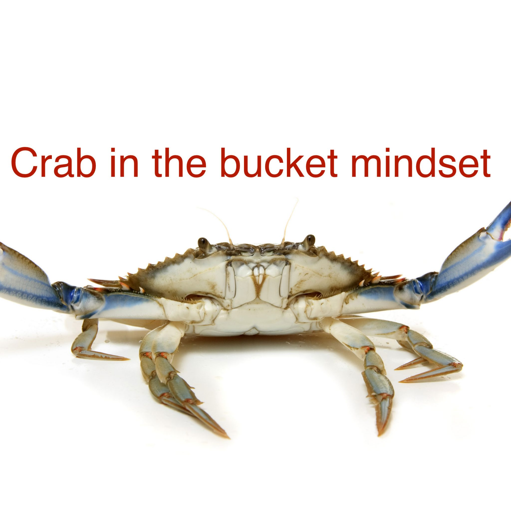 Crab in the bucket syndrome in change
